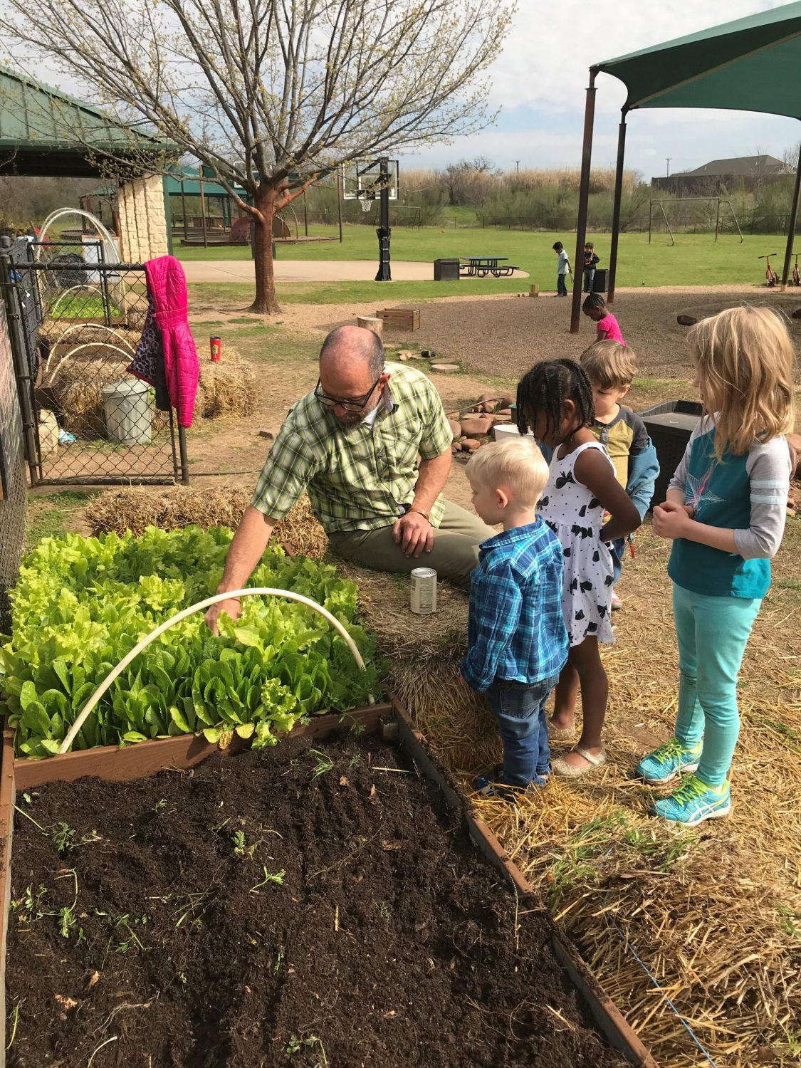 Early Childhood Gardening, The Montessori Academy of Arlington, Private School Arlington TX